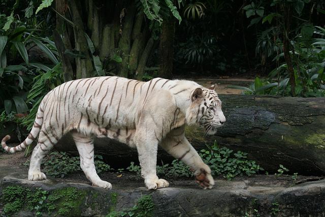トップ10  1位 シンガポール動物園 (シンガポール) http://ww
